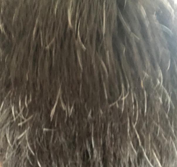 白髪染めする前(後頭部)