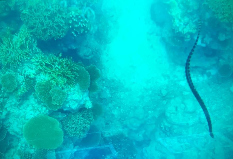石垣島川平湾のガラスボートからの水中